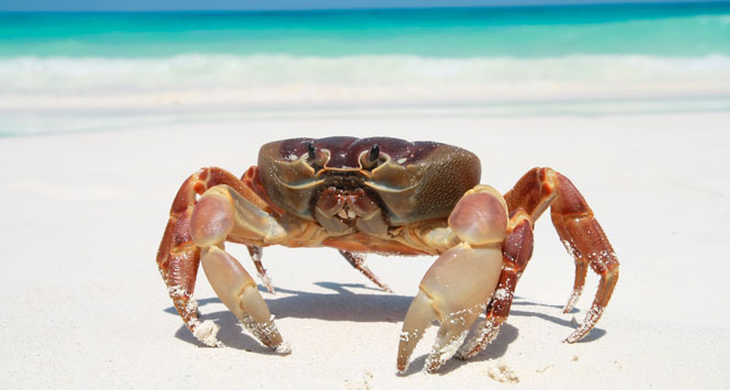 Crab-on-the-beach